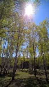 natur in uljanowsk